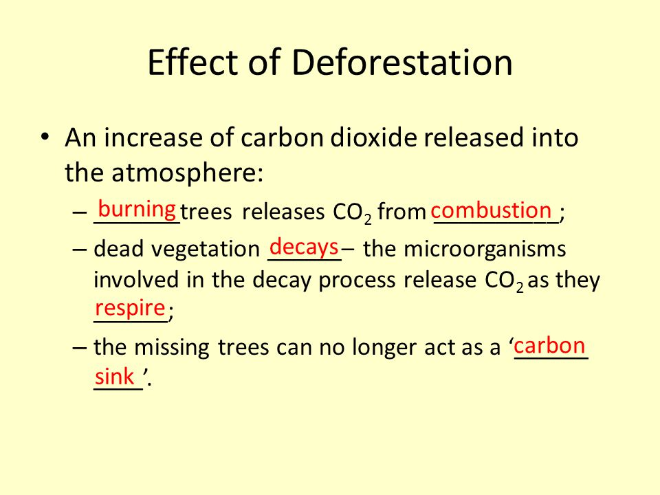 Effect of Deforestation An increase of carbon dioxide released into the atmosphere: – _______trees releases CO 2 from __________; – dead vegetation __