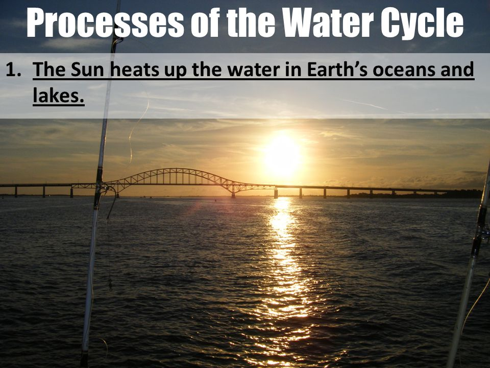 Processes of the Water Cycle 1.The Sun heats up the water in Earth's oceans and lakes.