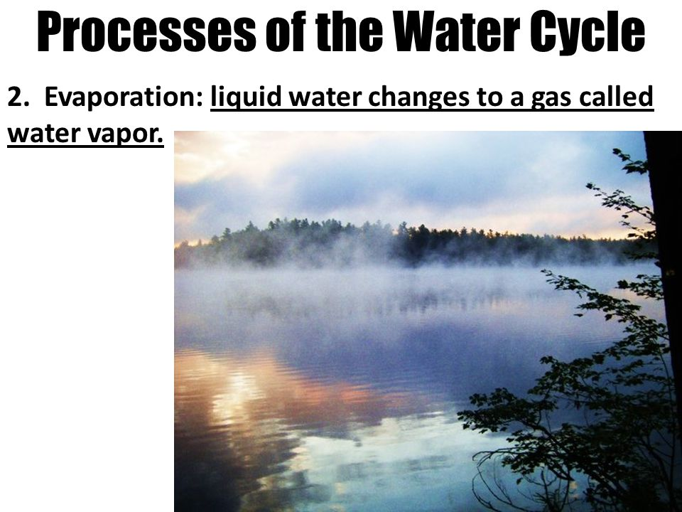 Processes of the Water Cycle 2. Evaporation: liquid water changes to a gas called water vapor.