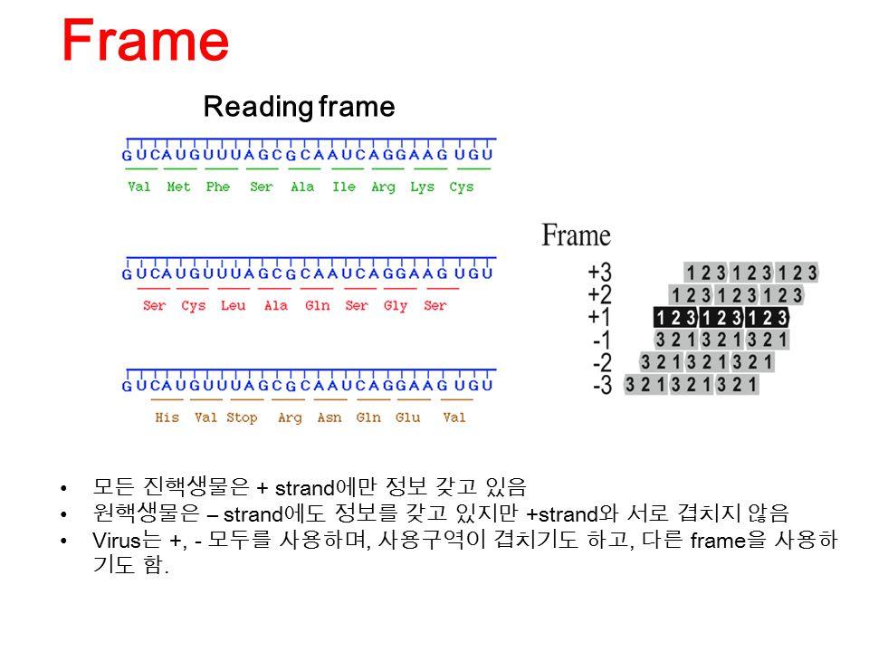 Reading frame Frame 모든 진핵생물은 + strand 에만 정보 갖고 있음 원핵생물은 – strand 에도 정보를 갖고 있지만 +strand 와 서로 겹치지 않음 Virus 는 +, - 모두를 사용하며, 사용구역이 겹치기도 하고, 다른 frame 을 사용하 기도 함.