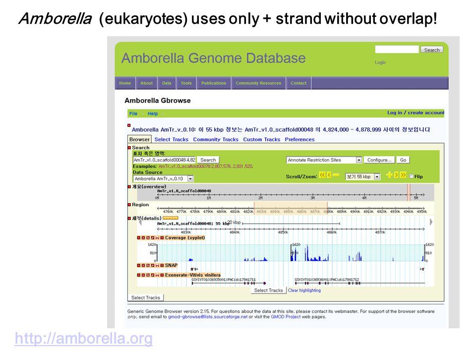 Amborella (eukaryotes) uses only + strand without overlap! http://amborella.org