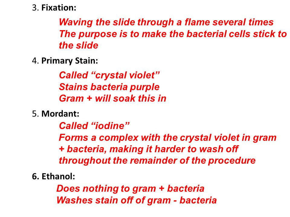 """3. Fixation: Waving the slide through a flame several times The purpose is to make the bacterial cells stick to the slide 4. Primary Stain: Called """"cr"""