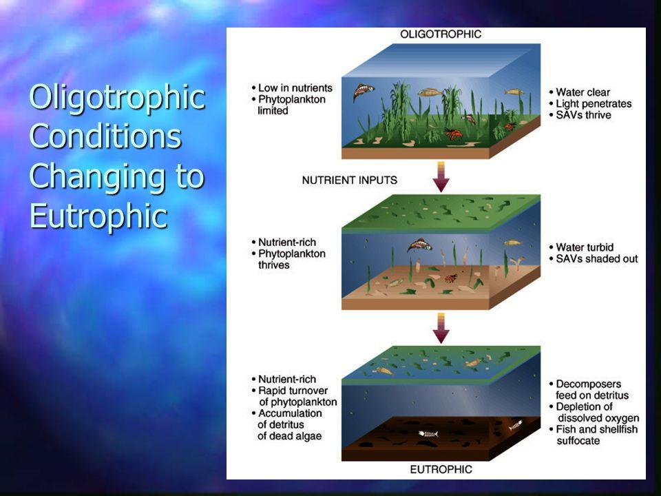 Oligotrophic Conditions Changing to Eutrophic