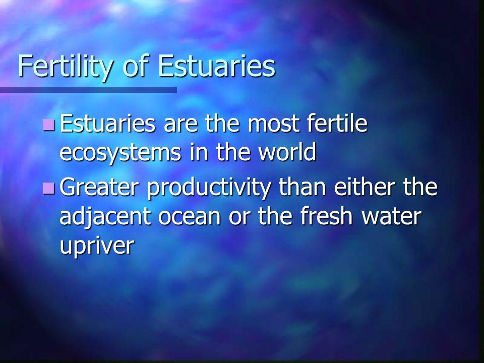 Fertility of Estuaries Estuaries are the most fertile ecosystems in the world Estuaries are the most fertile ecosystems in the world Greater productiv