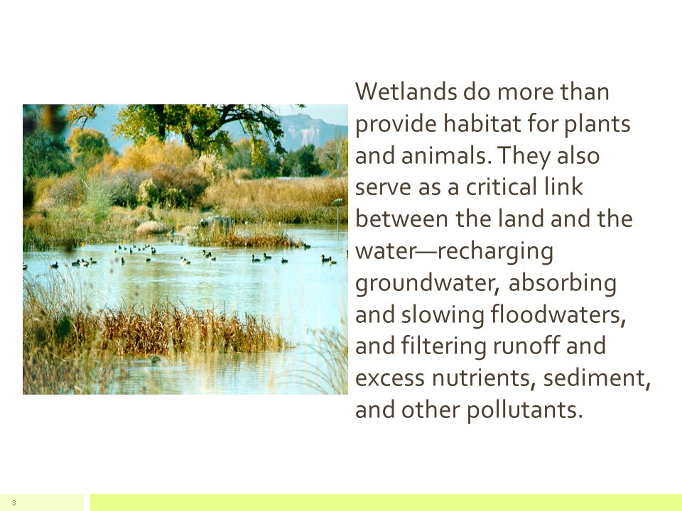 8 Wetlands do more than provide habitat for plants and animals.
