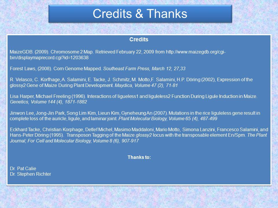 Credits & Thanks Credits MaizeGDB. (2009). Chromosome 2 Map.