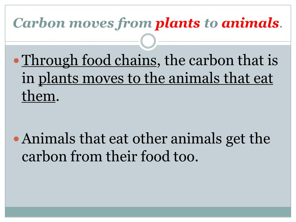 Carbon moves from plants and animals to the ground.