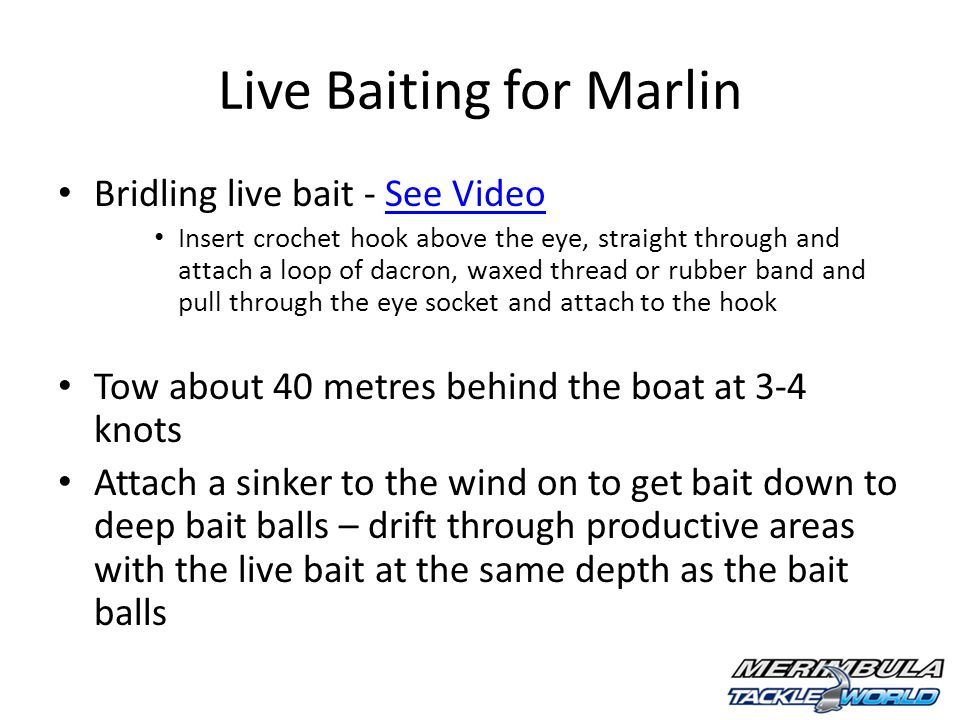 Live Baiting for Marlin Bridling live bait - See VideoSee Video Insert crochet hook above the eye, straight through and attach a loop of dacron, waxed thread or rubber band and pull through the eye socket and attach to the hook Tow about 40 metres behind the boat at 3-4 knots Attach a sinker to the wind on to get bait down to deep bait balls – drift through productive areas with the live bait at the same depth as the bait balls