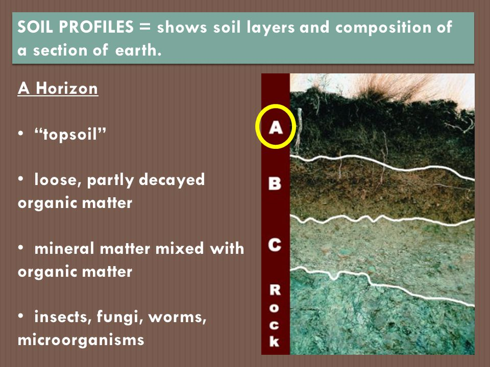 SOIL PROFILES = shows soil layers and composition of a section of earth.