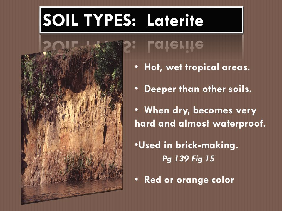 Makes up much of the soil in rainforests.