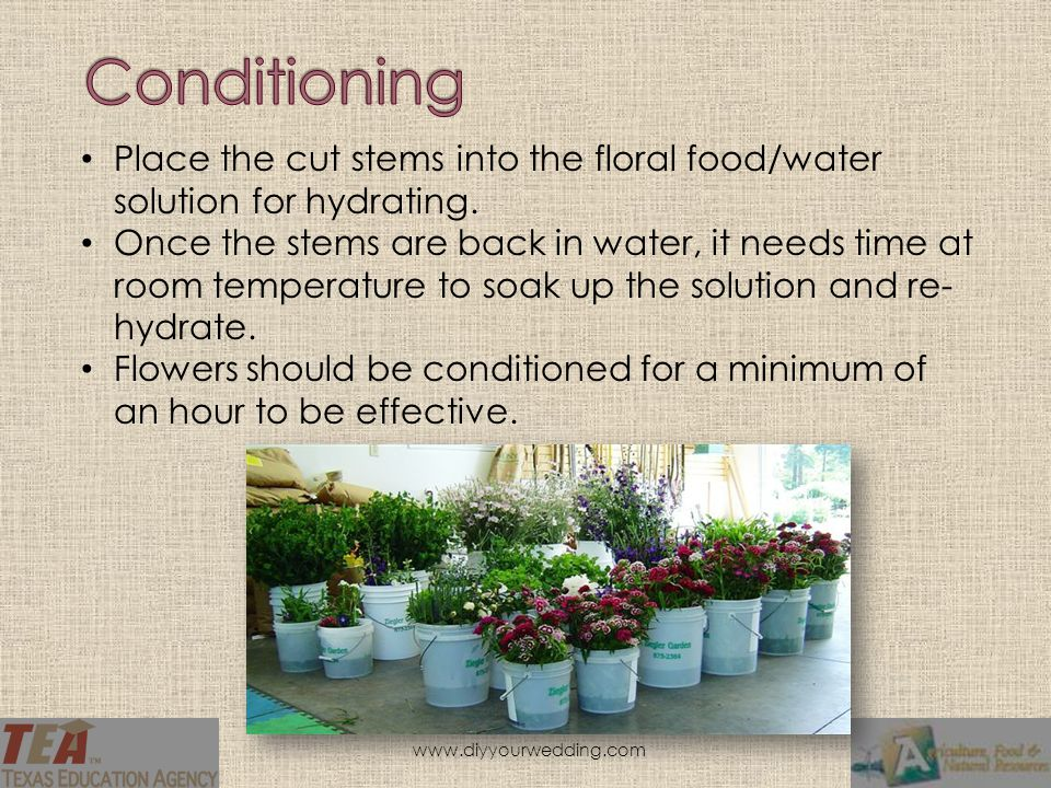 Place the cut stems into the floral food/water solution for hydrating.