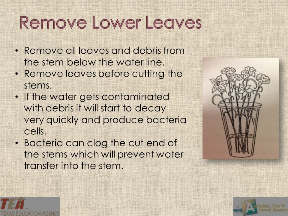 Remove all leaves and debris from the stem below the water line.
