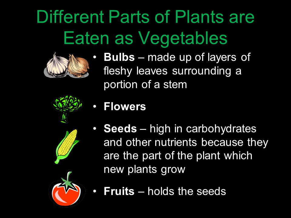 15 Different Parts of Plants are Eaten as Vegetables Bulbs – made up of layers of fleshy leaves surrounding a portion of a stem Flowers Seeds – high in carbohydrates and other nutrients because they are the part of the plant which new plants grow Fruits – holds the seeds