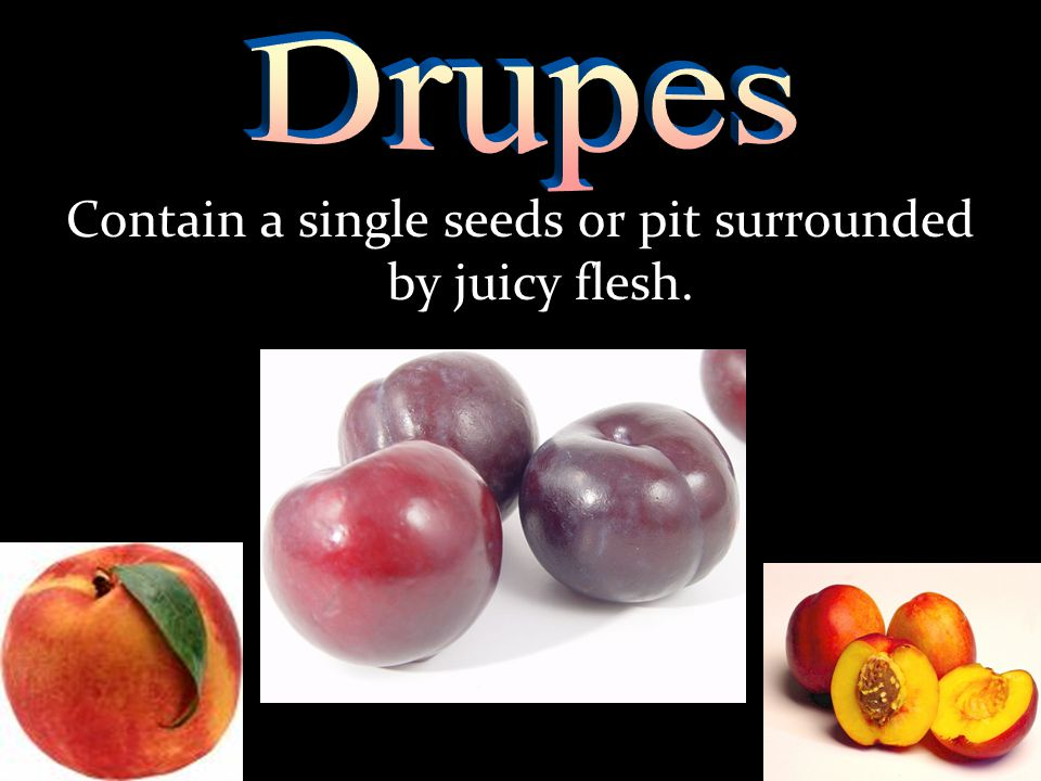 Contain a single seeds or pit surrounded by juicy flesh.