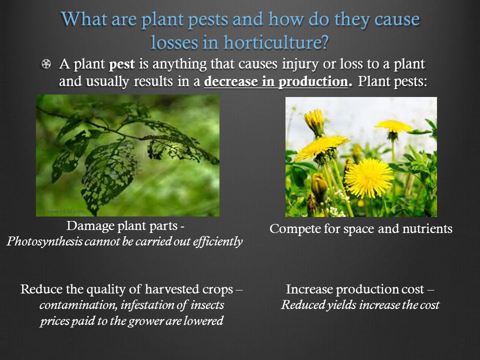 What are the five major categories of pests? INSECTS NEMATODES WEEDS DISEASE RODENTS