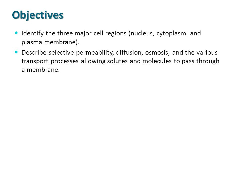 Objectives Identify the three major cell regions (nucleus, cytoplasm, and plasma membrane). Describe selective permeability, diffusion, osmosis, and t