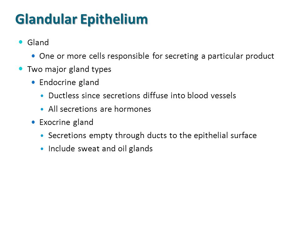 Glandular Epithelium Gland One or more cells responsible for secreting a particular product Two major gland types Endocrine gland Ductless since secre