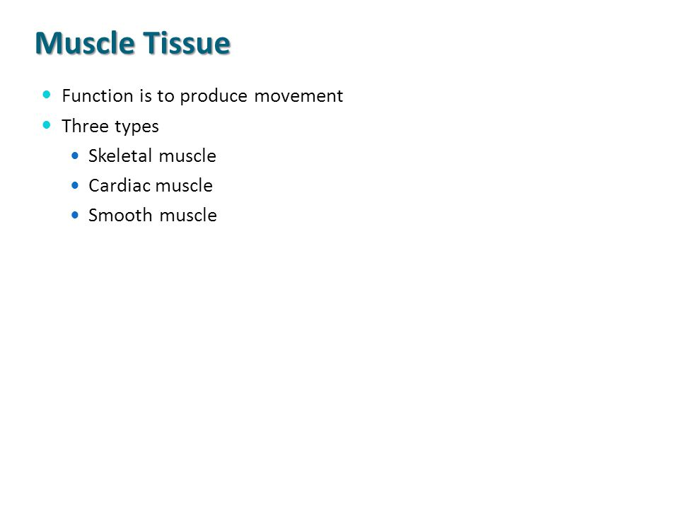 Muscle Tissue Function is to produce movement Three types Skeletal muscle Cardiac muscle Smooth muscle