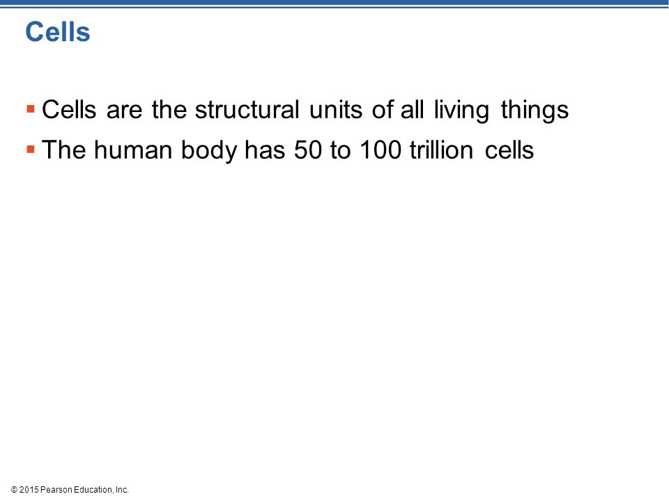 Cells  Cells are the structural units of all living things  The human body has 50 to 100 trillion cells © 2015 Pearson Education, Inc.