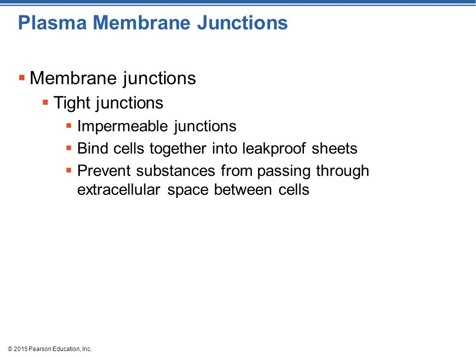 © 2015 Pearson Education, Inc. Plasma Membrane Junctions  Membrane junctions  Tight junctions  Impermeable junctions  Bind cells together into lea