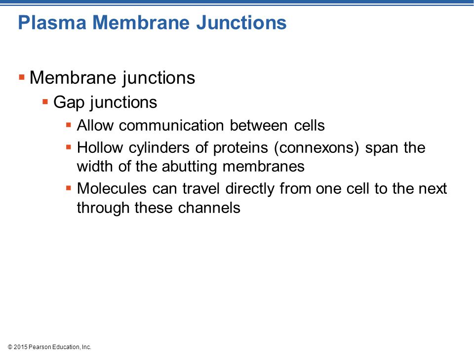 © 2015 Pearson Education, Inc. Plasma Membrane Junctions  Membrane junctions  Gap junctions  Allow communication between cells  Hollow cylinders o