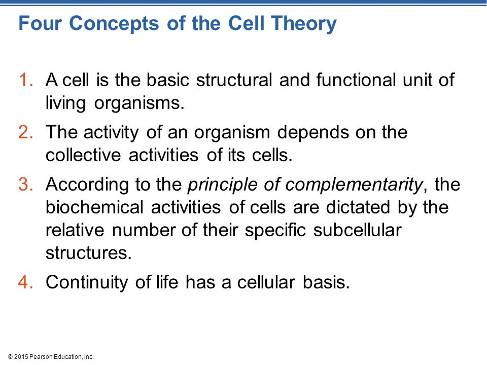 Four Concepts of the Cell Theory 1.A cell is the basic structural and functional unit of living organisms.