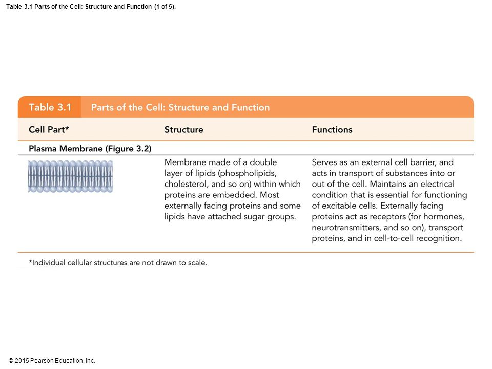 © 2015 Pearson Education, Inc. Table 3.1 Parts of the Cell: Structure and Function (1 of 5).