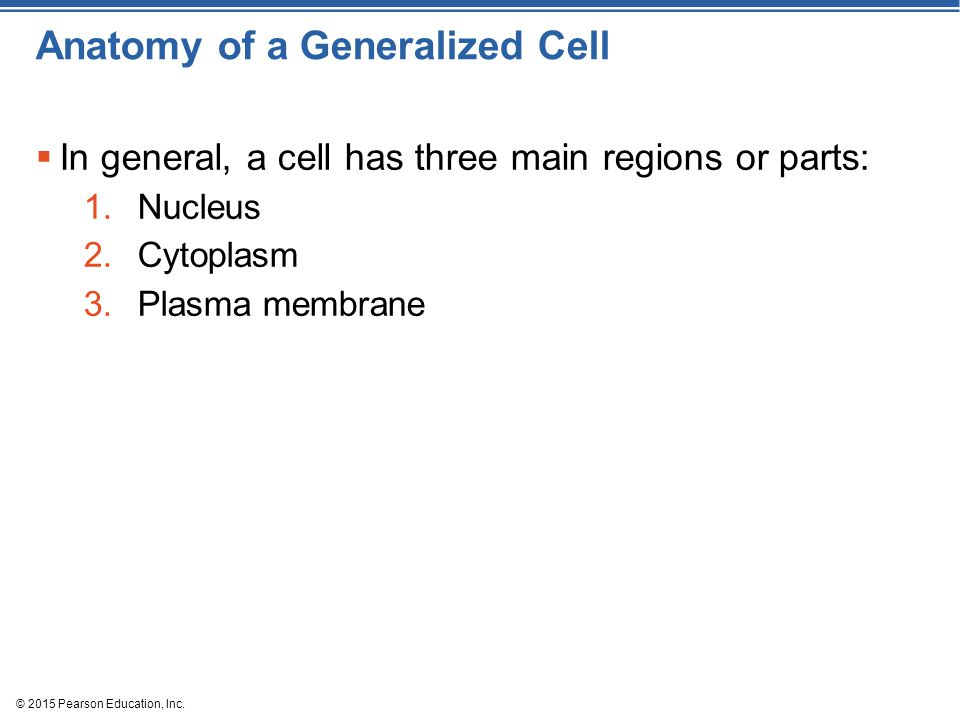 Anatomy of a Generalized Cell  In general, a cell has three main regions or parts: 1.Nucleus 2.Cytoplasm 3.Plasma membrane © 2015 Pearson Education,