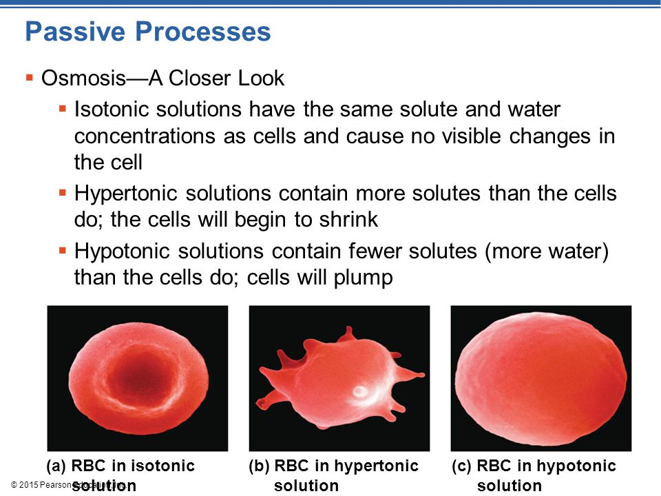 © 2015 Pearson Education, Inc. Passive Processes  Osmosis—A Closer Look  Isotonic solutions have the same solute and water concentrations as cells a