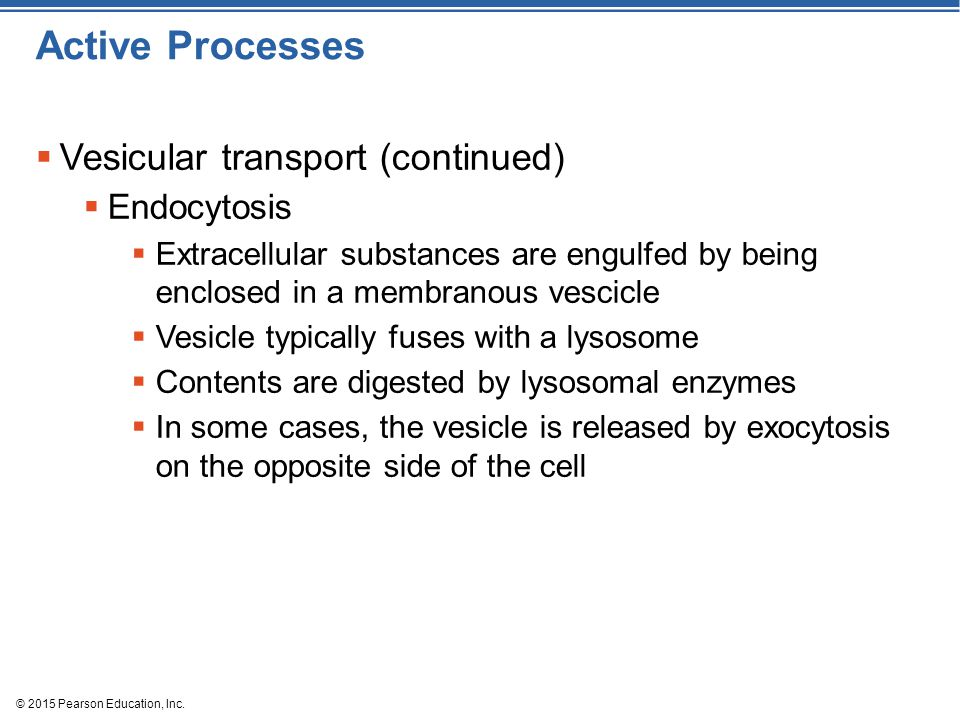 © 2015 Pearson Education, Inc. Active Processes  Vesicular transport (continued)  Endocytosis  Extracellular substances are engulfed by being enclo