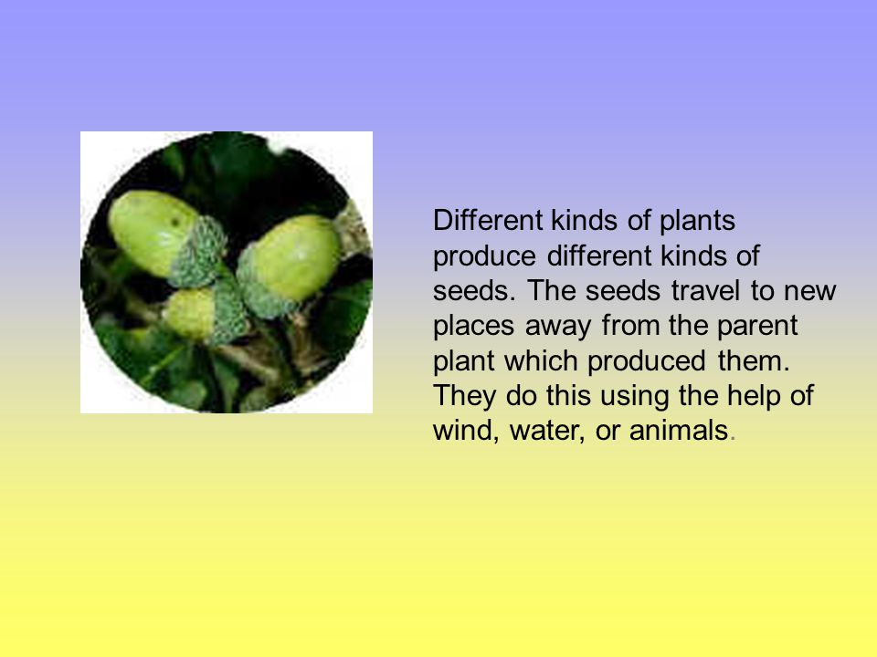 Different kinds of plants produce different kinds of seeds.