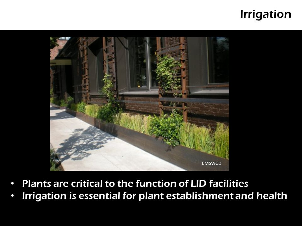 Irrigation P Plants are critical to the function of LID facilities Irrigation is essential for plant establishment and health EMSWCD