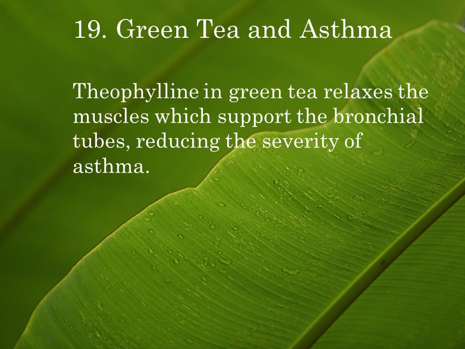 19. Green Tea and Asthma Theophylline in green tea relaxes the muscles which support the bronchial tubes, reducing the severity of asthma.