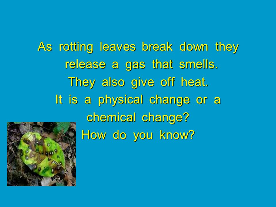 As rotting leaves break down they release a gas that smells.