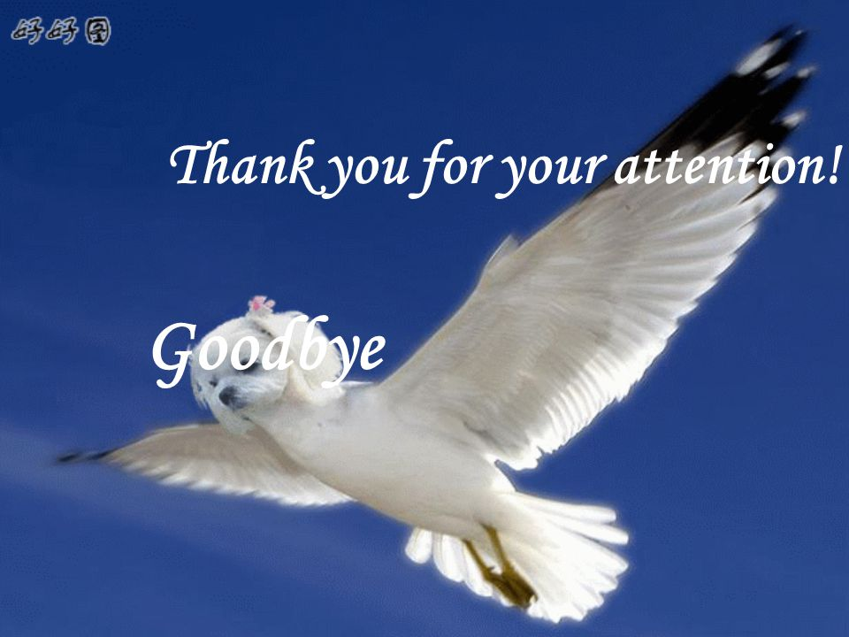 Thank you for your attention! Goodbye