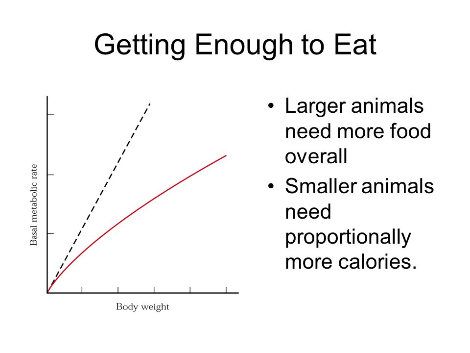 Getting Enough to Eat Larger animals need more food overall Smaller animals need proportionally more calories.