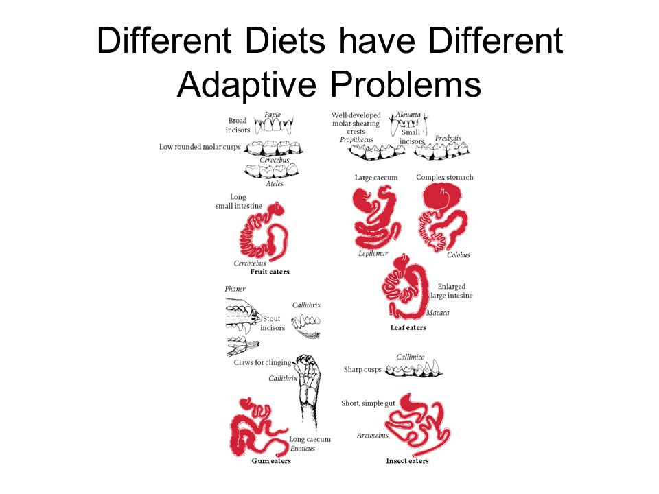 Different Diets have Different Adaptive Problems