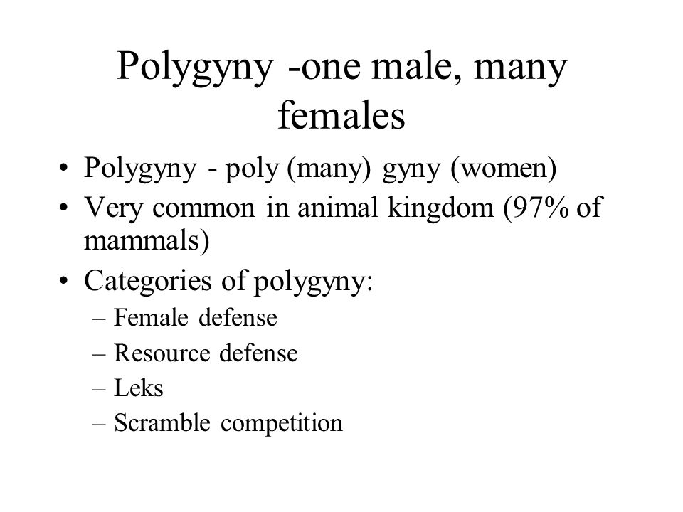 Polygyny -one male, many females Polygyny - poly (many) gyny (women) Very common in animal kingdom (97% of mammals) Categories of polygyny: –Female defense –Resource defense –Leks –Scramble competition