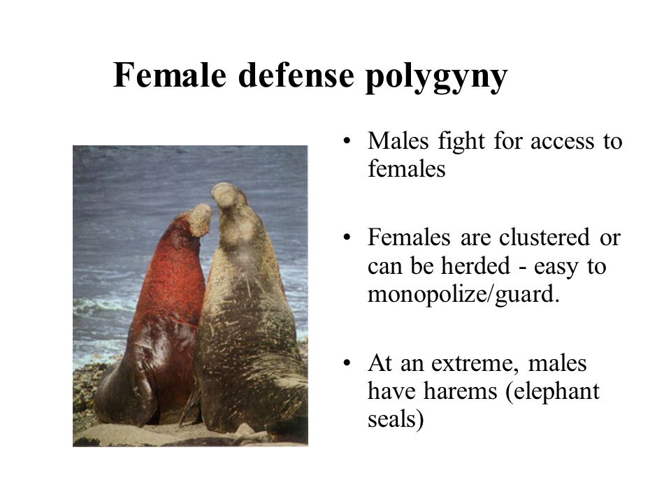 Female defense polygyny Males fight for access to females Females are clustered or can be herded - easy to monopolize/guard. At an extreme, males have