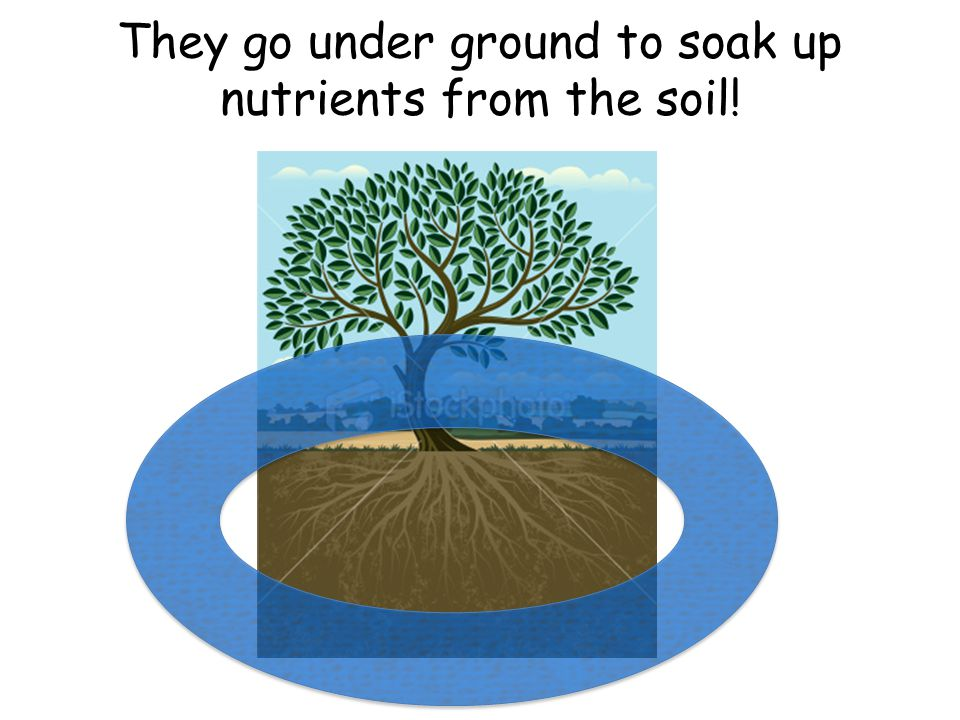 They go under ground to soak up nutrients from the soil!