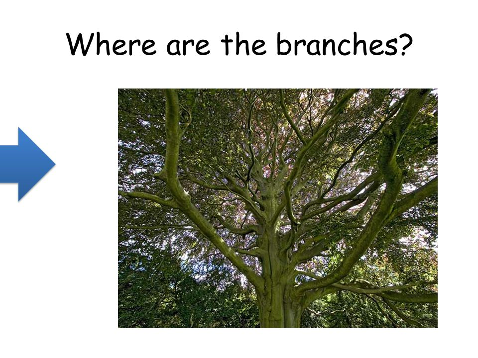 Where are the branches?