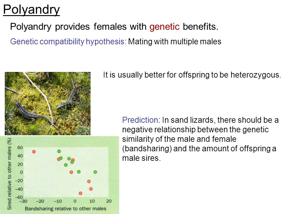 Prediction: In sand lizards, there should be a negative relationship between the genetic similarity of the male and female (bandsharing) and the amoun
