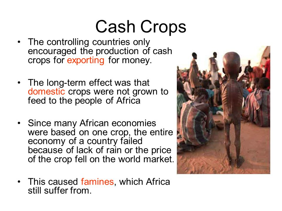 Cash Crops The controlling countries only encouraged the production of cash crops for exporting for money. The long-term effect was that domestic crop