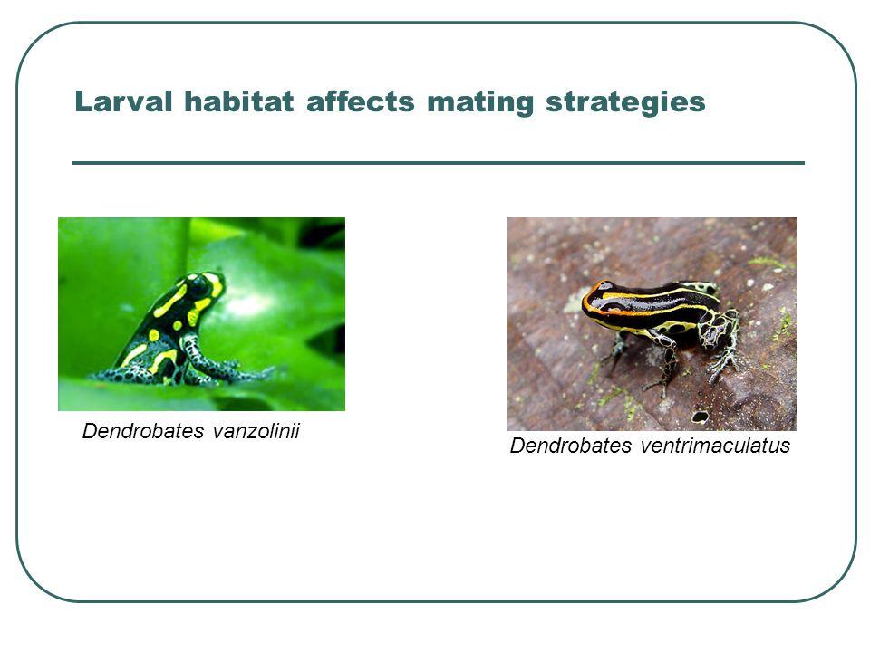 Dendrobates vanzolinii Dendrobates ventrimaculatus Larval habitat affects mating strategies