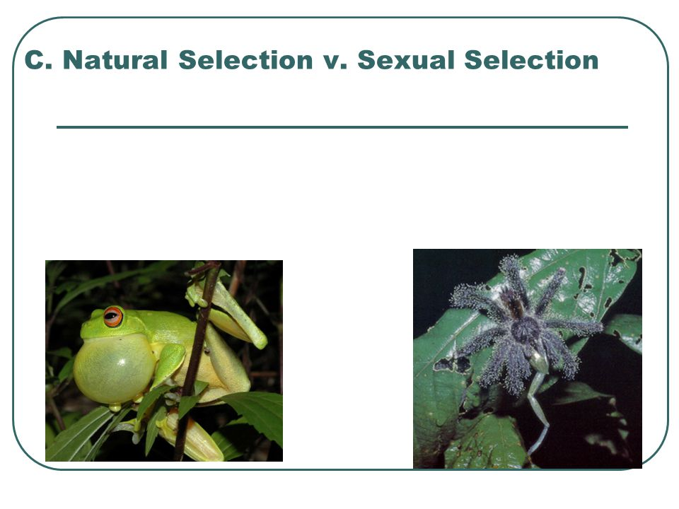 C. Natural Selection v. Sexual Selection