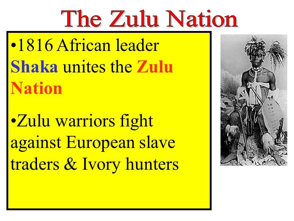 1816 African leader Shaka unites the Zulu Nation Zulu warriors fight against European slave traders & Ivory hunters