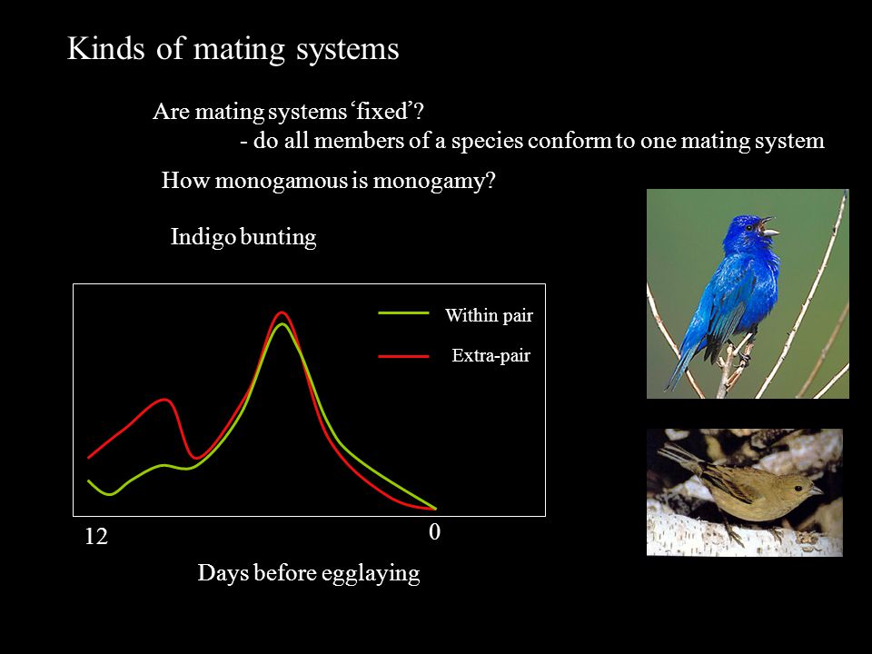Kinds of mating systems Are mating systems ' fixed ' .