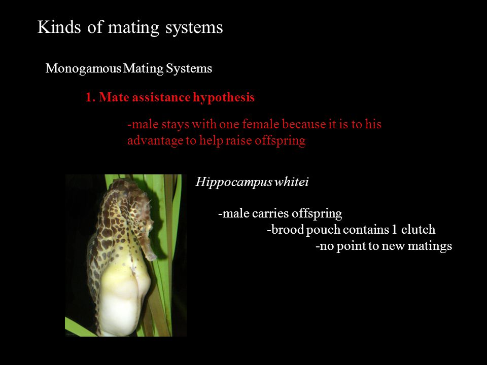 Kinds of mating systems Monogamous Mating Systems 1.