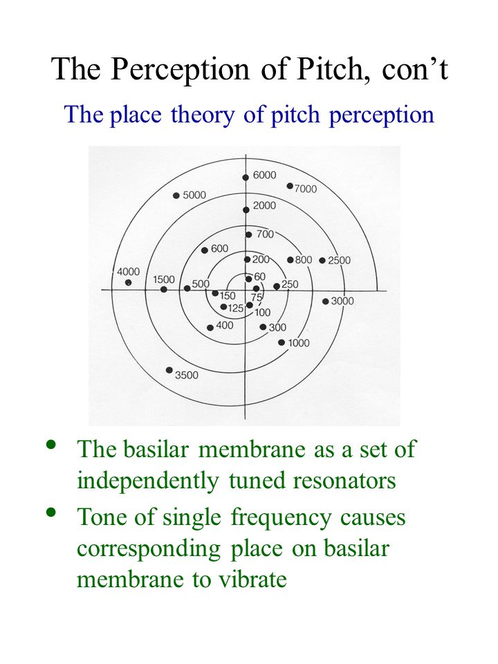 The Perception of Pitch, con't The place theory of pitch perception The basilar membrane as a set of independently tuned resonators Tone of single frequency causes corresponding place on basilar membrane to vibrate