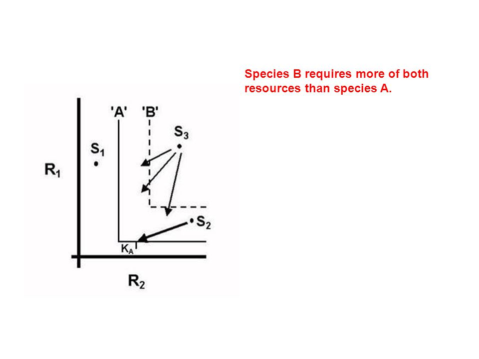 Species B requires more of both resources than species A.